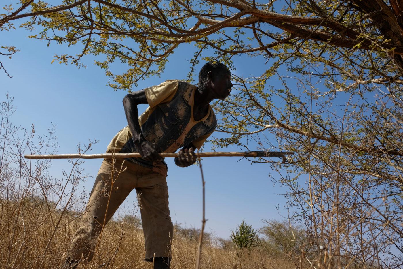 Mies seisoo pitkä keppi käsissään puun edessä. En man står framför ett träd och håller en lång käpp i handen.