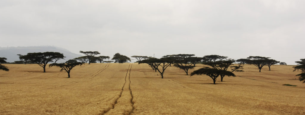 Afrikkalainen savannimaisema